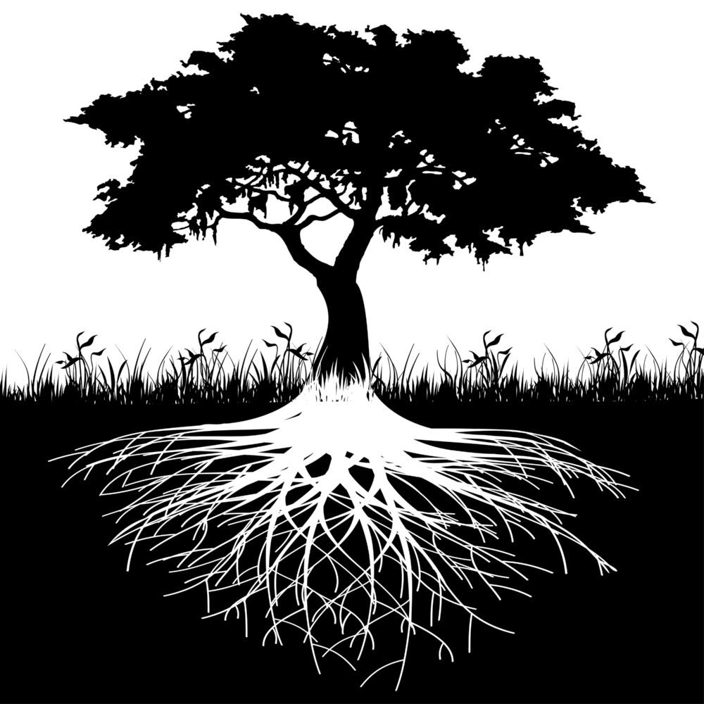 Especial Ayuntamientos: Claves para contratar una empresa de poceria para la eliminación de raíces en tuberías.