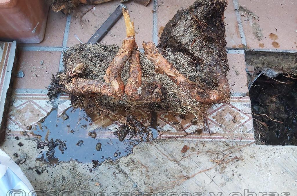 Fresado de raíces en tuberías. La solución definitiva.