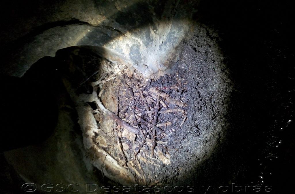 atascos en tuberías por raíces